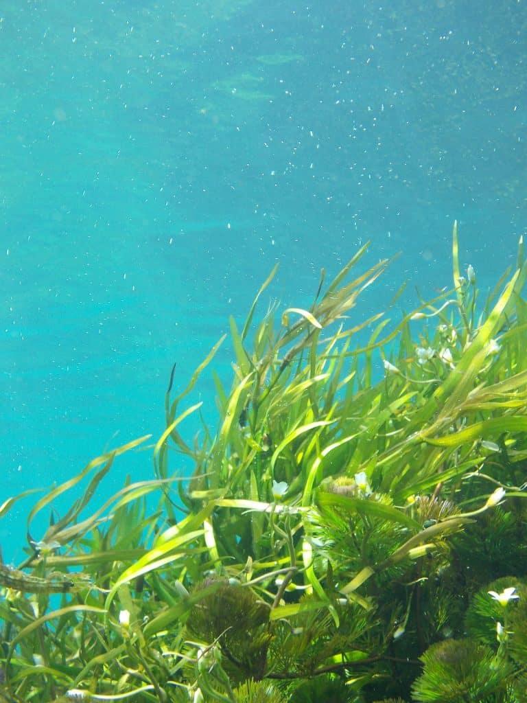 algue bienfaits sur la sante naturopathie